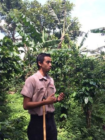 Finca Rosa Blanca Coffee Plantation & Inn: our guide, ulysses, on ur tour of the coffee plantation