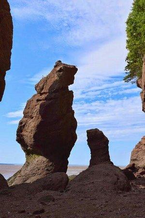Bear Rock Hopewell Rocks Park