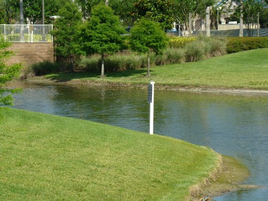 Bluegreen Fountains Resort : Lake on grounds, walking to the pool