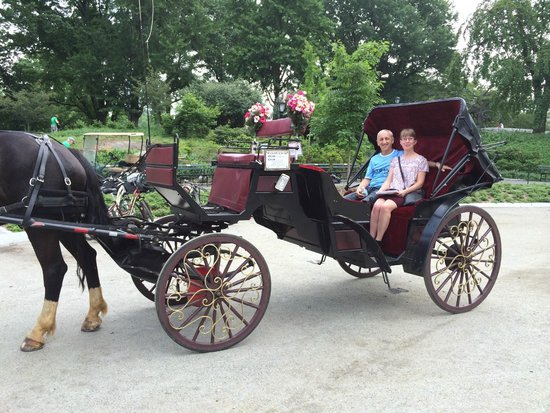 Central Park Horses: horse and carriage