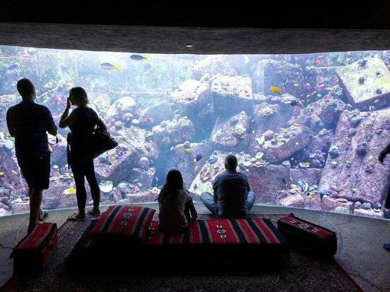 The Lost Chambers Aquarium: One of aquariums