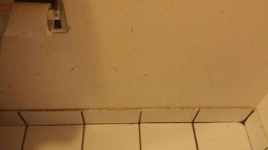 Quality Inn: Poop on the bathroom walls