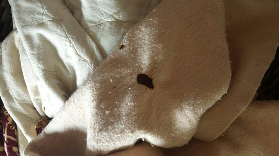 Quality Inn: The bed sheets with being holes