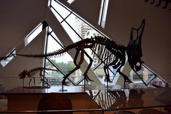 Musée royal de l'Ontario : Bones