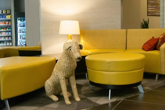 Hyatt House Falls Church: Our welcoming friend watching in the lobby!