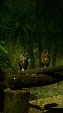 Night Safari : Owls