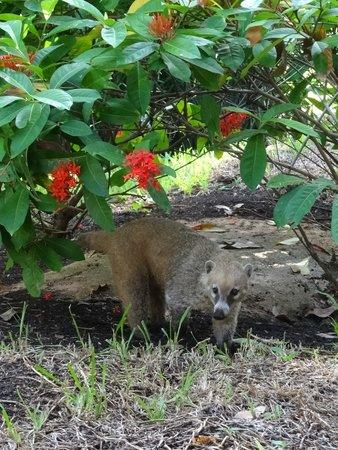 Viva Wyndham Maya: resident animals