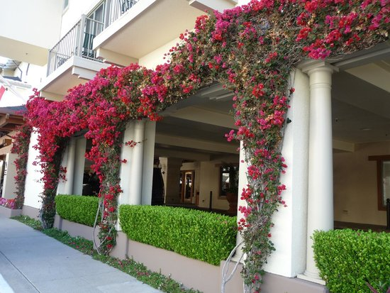 Monterey Plaza Hotel & Spa: Gorgeous Flowers Everywhere!