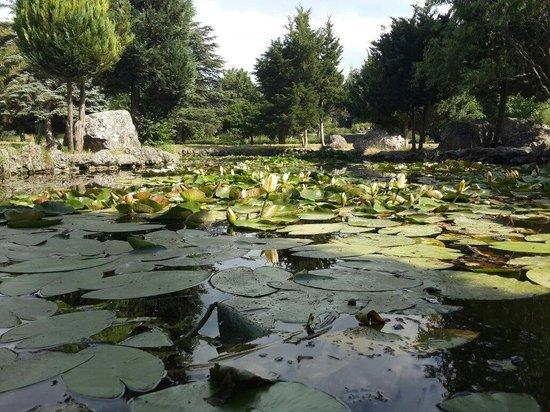 Salgirka City Park: Пруды Ботанического сада ТНУ им. Вернадского
