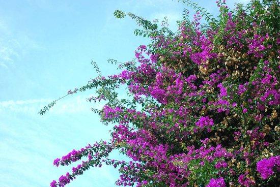 Giardini di Augusto: Beautiful flowers and blue sky.