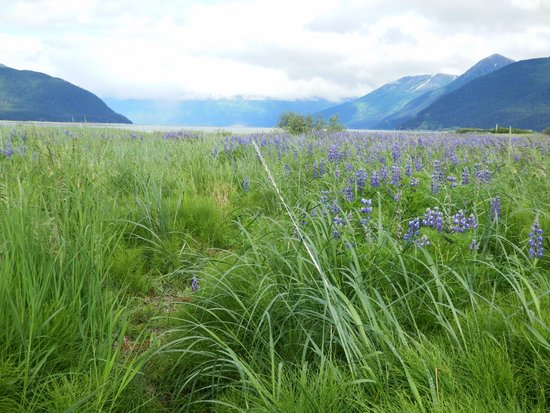 Alaska Wildlife Conservation Center: Lupine and Turnigan Arm