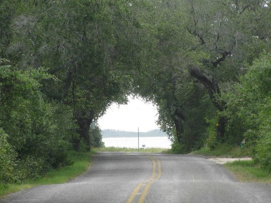 Rockport, Teksas: View to drive toward Big Oak at Goose Island