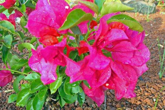 Rancho Las Cascadas - Resort: Gardens
