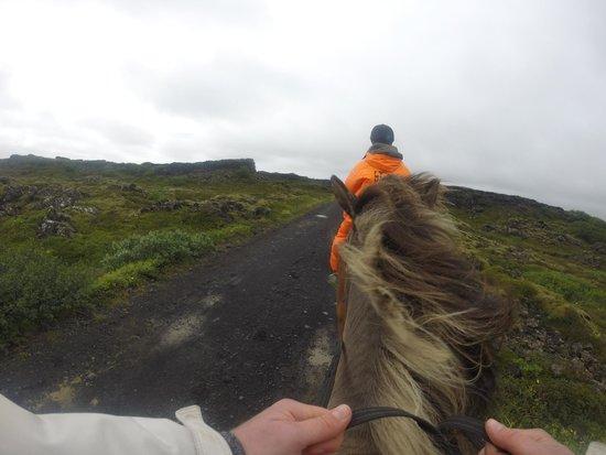 Ishestar Horse Riding Tours: Viking trek
