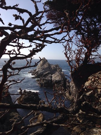 Point Lobos State Reserve: What views!