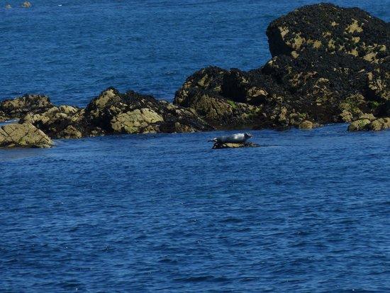 Reserve Naturelle des Sept Iles: phoque