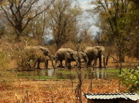 Wildlife Camp: elefanten direkt am Camp