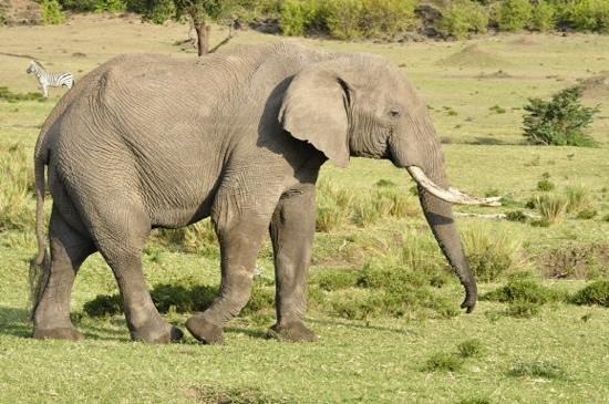 Ol Malo: Elephant spotting .....