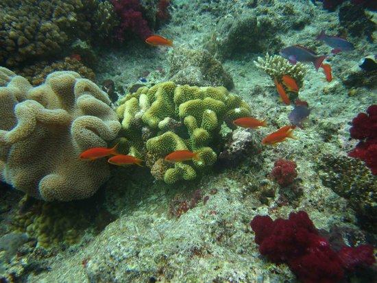 Jean-Michel Cousteau Diving: Pics whilst diving