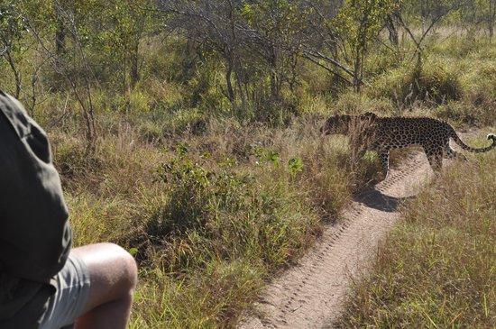 Tydon Safari Camp : PURE LUCK