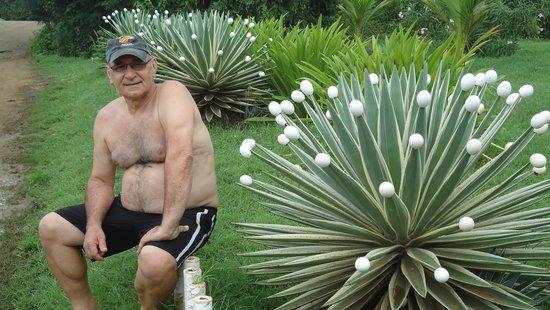 Pousada Lenda das Aguas: O descanso do guerreiro. (O branco nas pontas da planta são cascas de ovos)