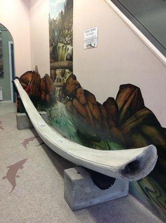 Sitka Sound Science Center: whale jaw bone