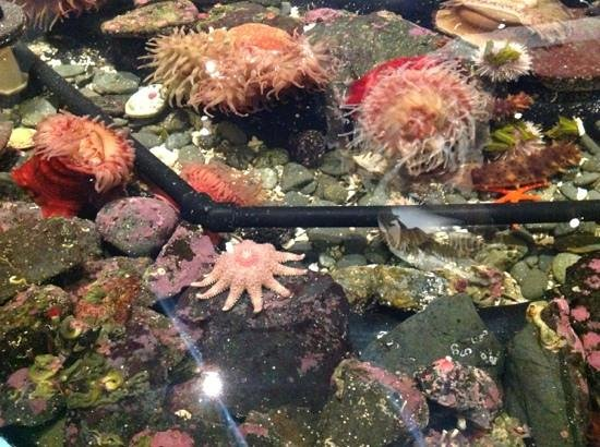 Sitka Sound Science Center: Tide pools