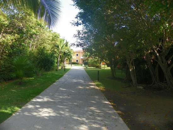 Ocean Maya Royale: Another main path showing how much jungle is around the resort.