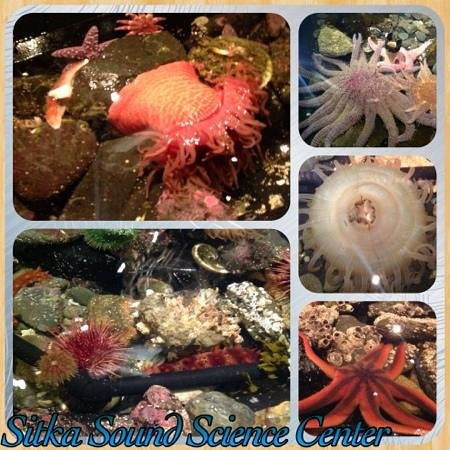 Sitka Sound Science Center: Collage of the touch tide pools