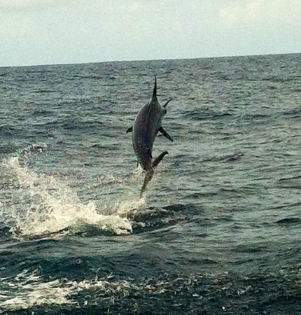 Quepos Fish Adventure Private Day Charters: Blue Marlin