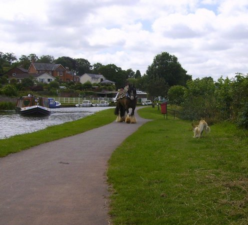 Tiverton Canal Co: Horse drawn canal boat on the move.