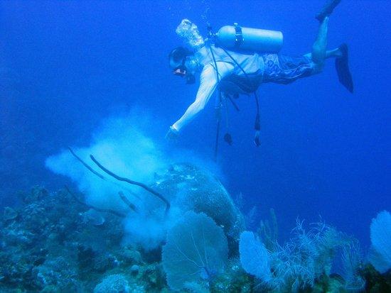 Cayman Marine Lab: Tom Byrnes Dusting-off a Brain Coral