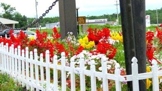 Budget Host Airport Inn : Flowers