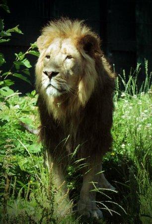 Dublin Zoo: Kumar