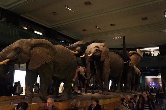 American Museum of Natural History : Impressionnant