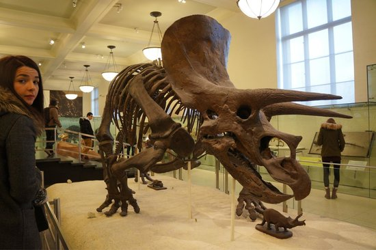 American Museum of Natural History : :)