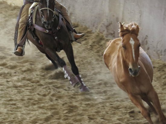 Lienzo charro Charros de Jalisco: Horse being chased before being roped