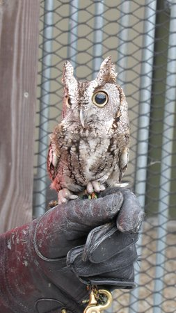 Southeastern Raptor Center: owl