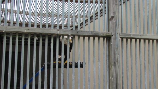 Southeastern Raptor Center : bald eagle, Spirit