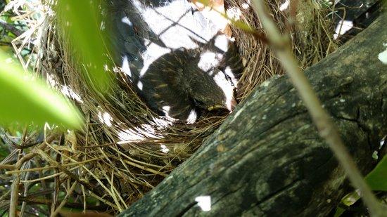Martinica Hotel Club Residence: Merlo nel nido