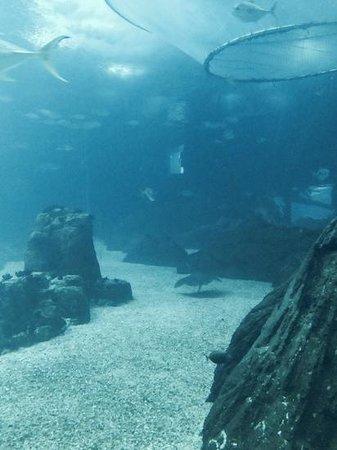 Lisbon Oceanarium : wspaniale akwarium