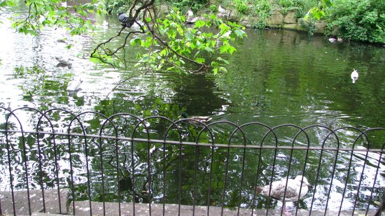 Parque St Stephen's Green: Birds on the pond