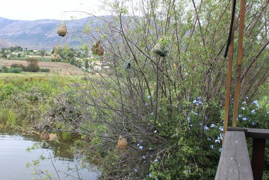 The Blue Cow: Bird nests near the deck