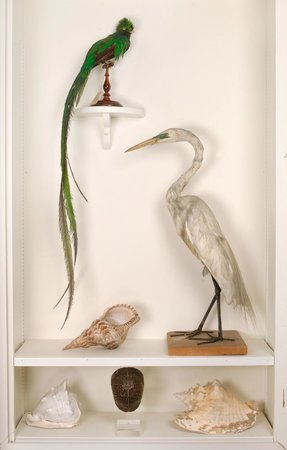 The Cazenovia Public Library: Some of the many birds in the museum collection
