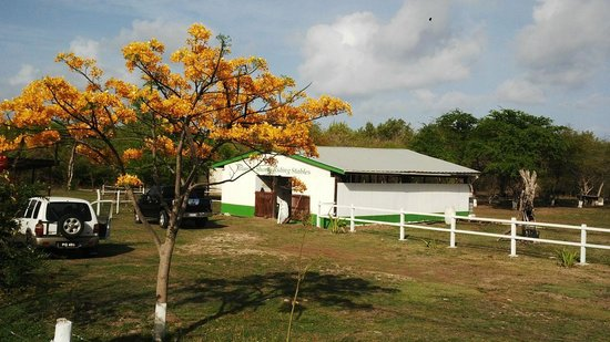 Atlantic Shores Riding Stables: flamboyant trees in bloom horseback riding St.Lucia