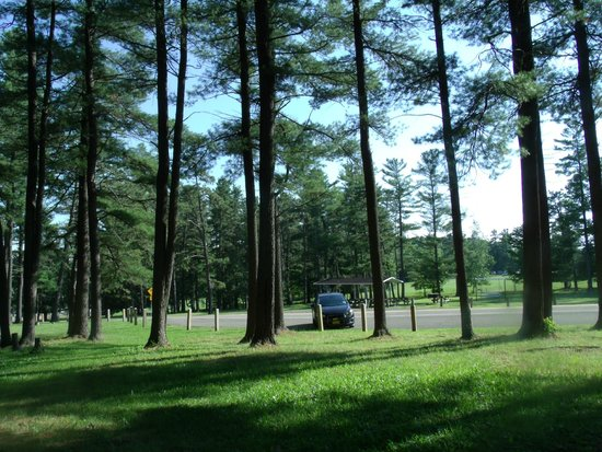 Harris Hill Soaring Center : Picnic areas in the woods
