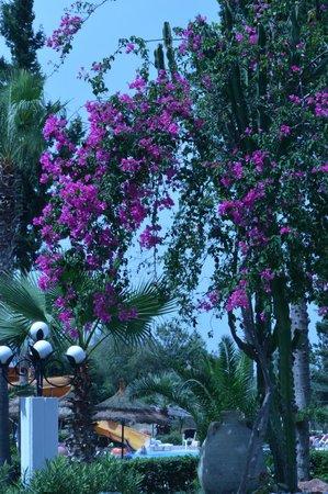Daphne Club Miramar: Prachtige natuur