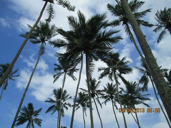 Tangerine Beach Hotel: Palm trees on grounds