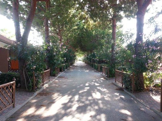 Salinello Camping Village: viale alberato