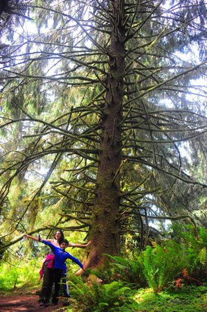 Clatsop Trail, Ecola state park. Awesome sitka spruce trees on the 2.5 mile long trail